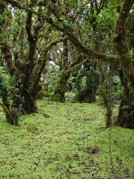 Ширење на мов низ Хавајските Острови