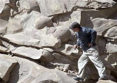 Во Русија можеби пронајдени фосилизирани јајца од диносаурус?
