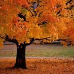 Во сабота на 22 септември почнува есента