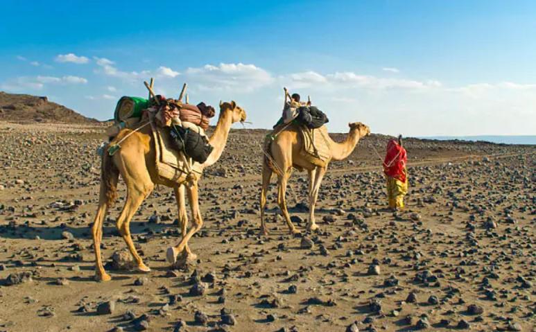 Кои се најголемите полуострови на континентите? Втор дел – Африка