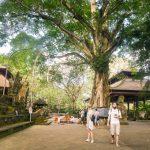 Извонредна туристичка атракција во Бали – Шума на мајмуните!