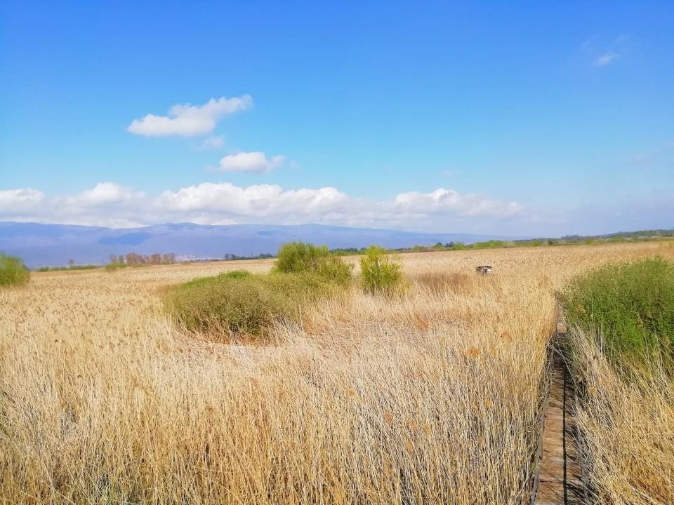 Моноспитовско Блато – последното типично мочуриште во Македонија