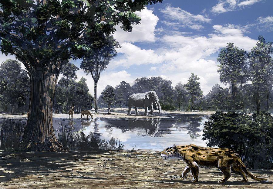 """Пред околу 10 милиони години, на просторот на денешната Скопска котлина живееле """"џиновски"""" слонови"""